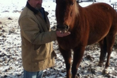 man feeding brown horse
